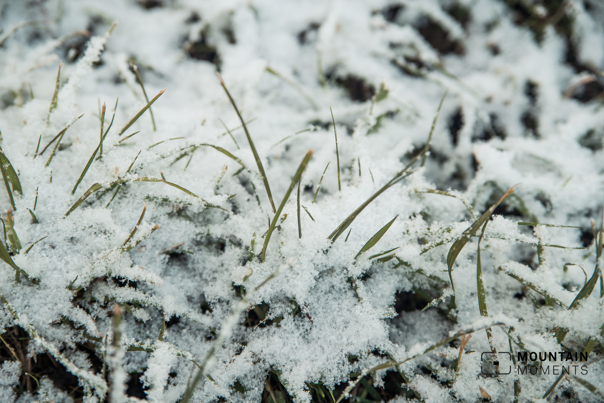 winterrunning, joggen im winter, laufen im winter, tipps joggen, tipps winterrunning, winter sport foto, winterlandschaft