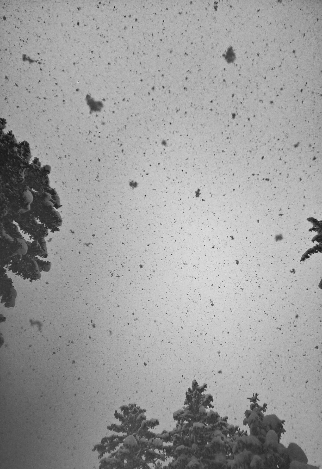 winterbilder,winter bild, winter tirol, winterbild tirol, schneefall, wald winter, schnee wald